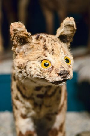 serval-failed Taxidermy.jpg